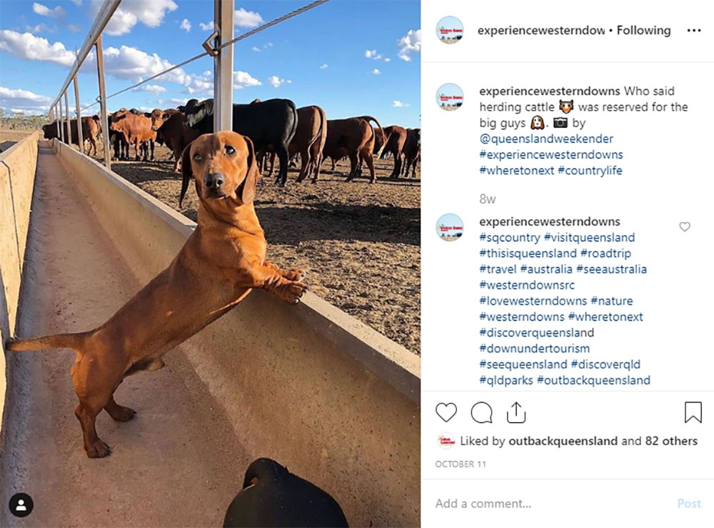 Media Mortar | Content Marketing Agency Brisbane | Instagram caption cures - Western Downs Sausage Dog