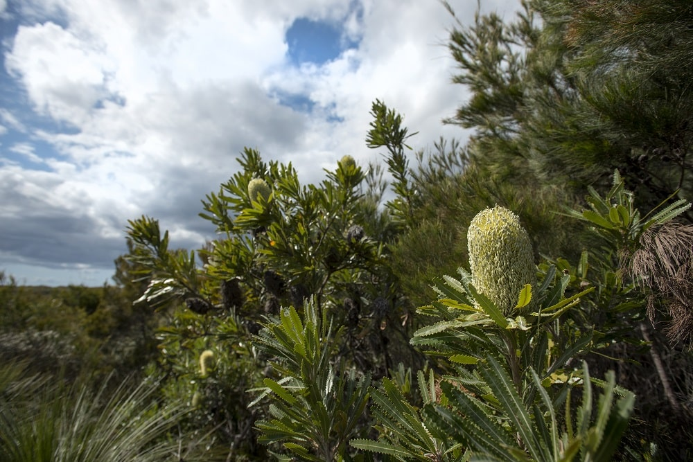 Media Mortar_Define your target audience_Moreton Island wildflowers